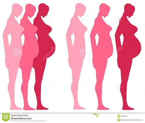 3 Trimesters of Pregnancy stock vector