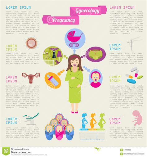Gynecology And Pregnancy Infographic Template